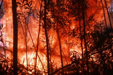 Nghệ An: Cháy rừng 3 khu vực đe dọa hàng chục hộ dân