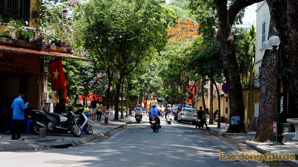 sac do hoa phuong phu khap pho phuong ha noi