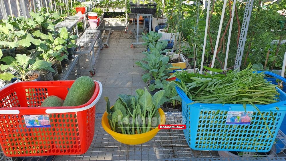 Chùm ảnh: Vườn rau xanh mướt của người dân trong mùa dịch Covid-19