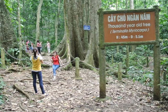 Vườn quốc gia Cúc Phương: Vẻ đẹp tiềm ẩn giữa đại ngàn