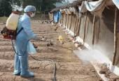 Hà Nội triển khai tháng vệ sinh, tiêu độc, khử trùng