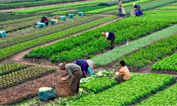 Giúp nông sản phát triển bền vững