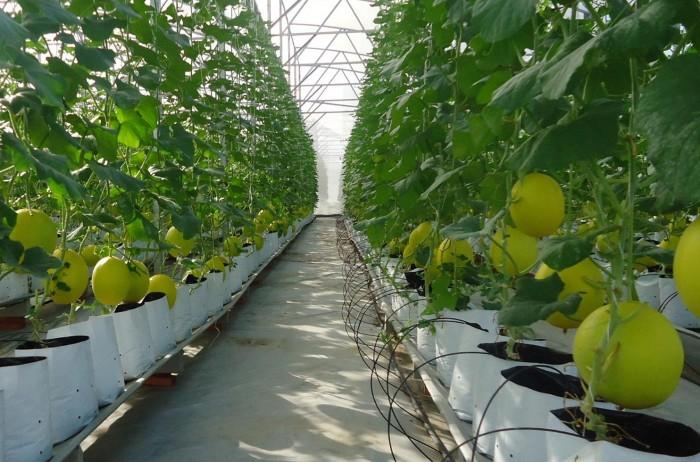 Doanh nghiệp Nhật muốn đầu tư vào nông nghiệp Việt Nam