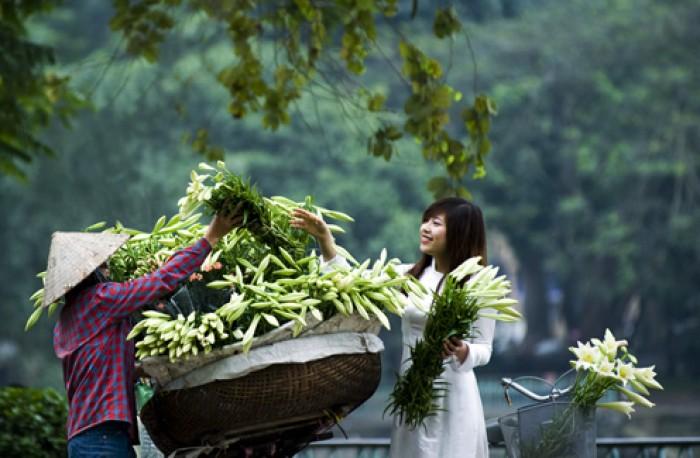 Hà Nội dịu dàng trong sắc hoa loa kèn