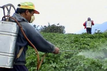 Gia tăng tình trạng sử dụng thuốc bảo vệ thực vật