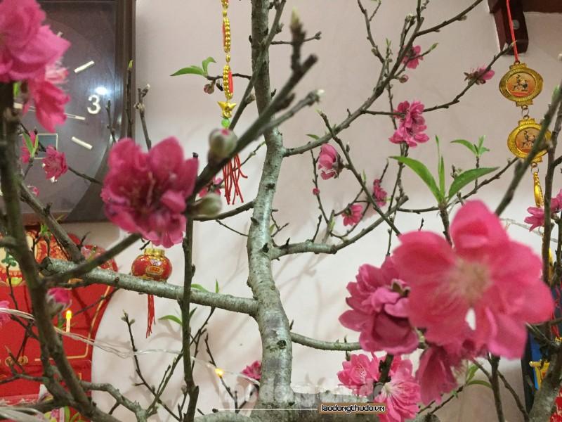 Nối tiếp những mùa xuân