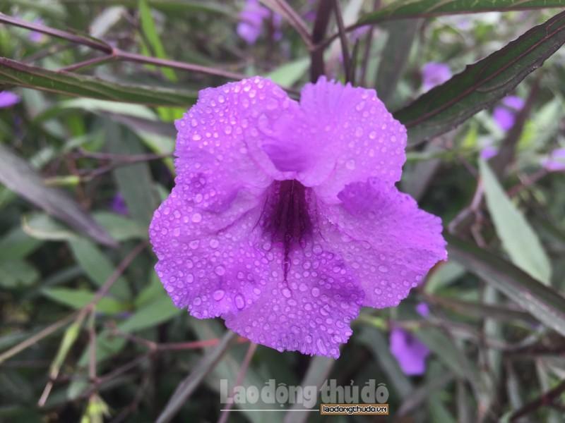 hoa trong xuan ve dep trong suong