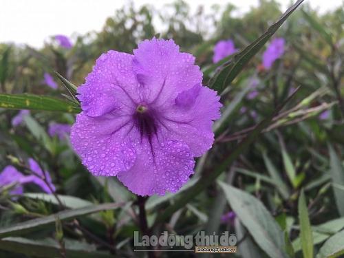 Hoa trong xuân, vẻ đẹp trong sương