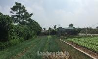 Huyện Thường Tín giữ vững kinh tế - xã hội trong dịch Covid-19