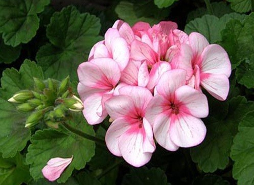 truyen ngan hoa phong lu