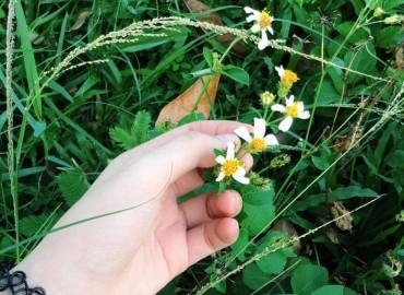 Hoa xuyến chi cuối mùa