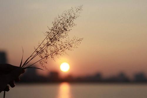 Ngày mai mặt trời lại lên
