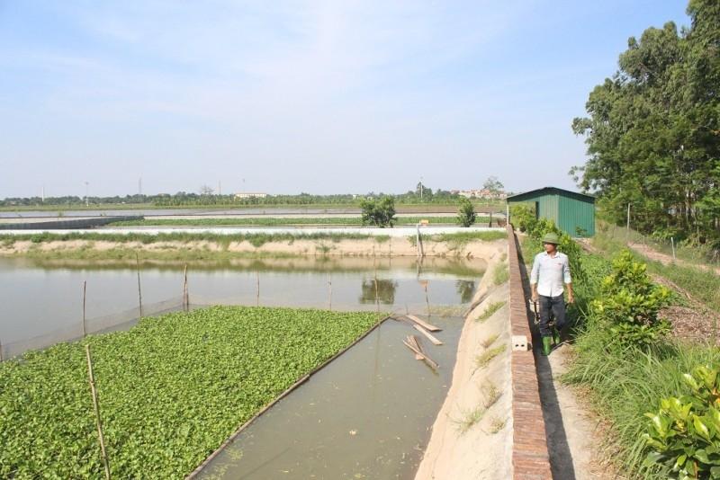 5 tháng đầu năm, sản lượng thủy sản nuôi trồng tăng ở mức khá