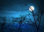 'Ánh trăng'