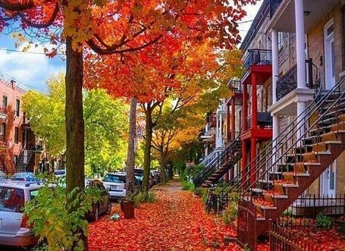 Mùa thu đẹp như tranh vẽ ở xứ sở lá phong