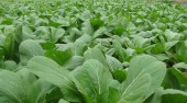 Đẩy mạnh tuyên truyền quy trình sản xuất rau an toàn