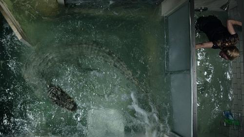 Khám phá 5 sự thật 'rùng rợn' về loài cá sấu châu Mỹ trước khi xem Địa đạo cá sấu tử thần