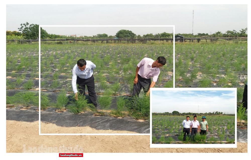 """Tạo """"vùng xanh"""" nông nghiệp an toàn: Mô hình cần nhân rộng"""