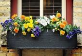 Bình hoa trên cửa sổ