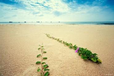 Chỉ sóng biết rằng... biển sẽ mãi yêu em