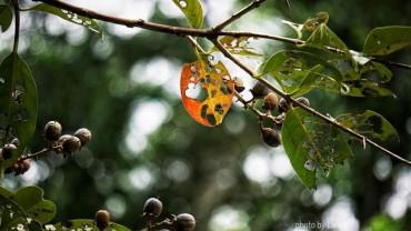 Lá chuyển màu sang thu