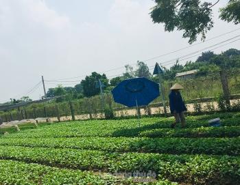 Huyện Thường Tín phấn đấu tăng các chỉ tiêu kinh tế trong 3 tháng cuối năm
