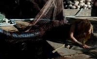 'Người cá' lần đầu tiên được khai thác dưới thể loại phim kinh dị