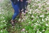 Phá nát đời hoa