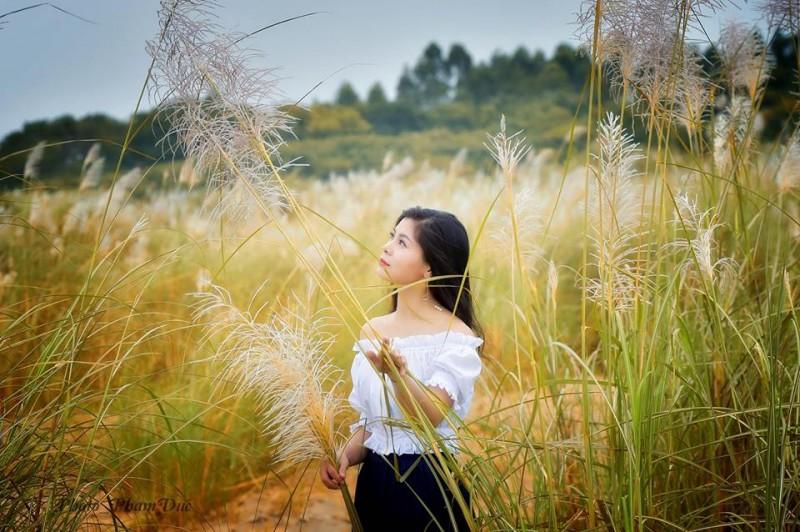 Truyện ngắn: Hoa cỏ lau