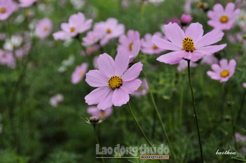 lang hoa o ha noi khien du khach quen loi ve