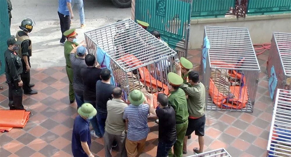 Nghệ An: Bắt tạm giam 1 bị can trong vụ nuôi nhốt 17 con hổ