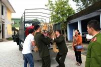 Huế: Chuyển giao bộ da hổ Bengal nhồi bông cho bảo tàng
