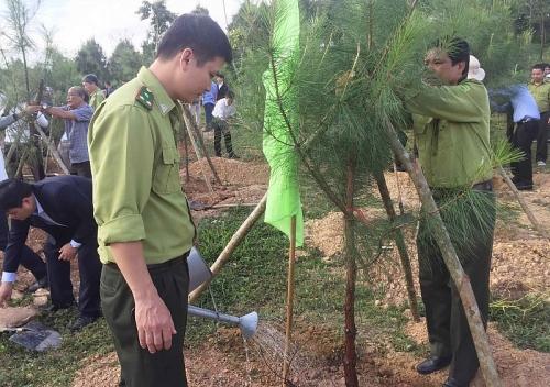 Thừa Thiên Huế: Phấn đấu trồng mới khoảng 7.000 ha rừng