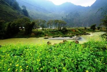 Hà Giang- mùa hoa cải mèo nở rộ