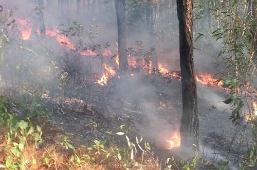 Thừa Thiên Huế: Rừng cháy đồng loạt ở nhiều nơi, di dân khẩn cấp