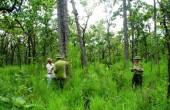 Gắn quy hoạch phát triển rừng với tái cấu trúc ngành lâm nghiệp