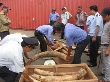 Điều tra làm rõ vụ vận chuyển trái phép ngà voi