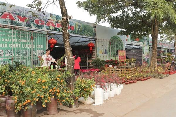 40 gian hàng tham gia Hội chợ hoa Xuân Canh Tý huyện Gia Lâm