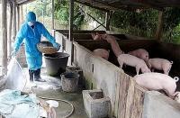 Tăng cường tuyên truyền phòng, chống bệnh dịch tả lợn châu Phi