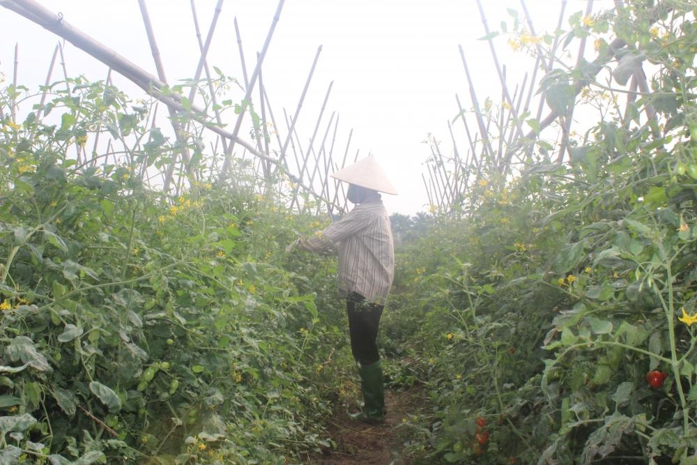 Xây dựng nông thôn mới: Đem lại lợi ích bền vững cho nông dân, nông thôn