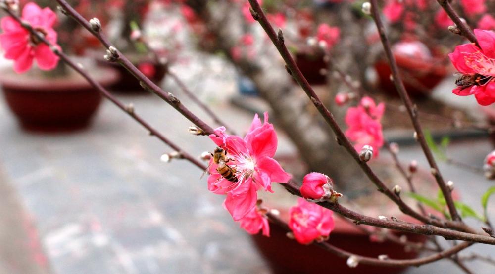 Lặng ngắm Hà Nội trong trẻo trong sắc Xuân
