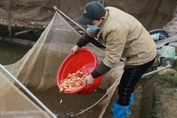 Một phần ba các loài cá đối mặt với nguy cơ tuyệt chủng