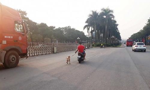 Nguy cơ tiềm ẩn khi dắt 'thú cưng' đi dạo