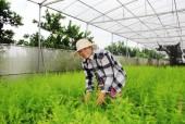 Phát triển nông nghiệp công nghệ cao trong xây dựng nông thôn mới