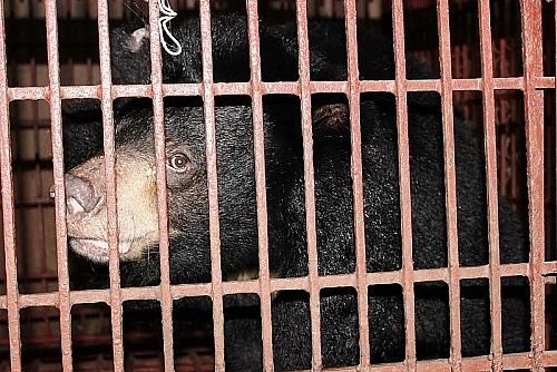 Buôn lậu động vật hoang dã vẫn chưa có dấu hiệu thuyên giảm