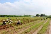 Sản xuất nông nghiệp 6 tháng đầu năm đạt nhiều kết quả khả quan