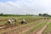 Hà Nội sẽ thanh tra sử dụng đất nông nghiệp, đất công tại nhiều quận huyện