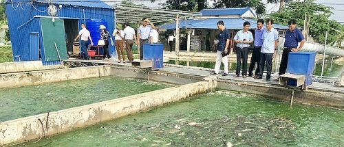 Ứng Hòa nỗ lực mở rộng phạm vi sử dụng nước sạch