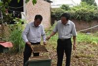 Thị xã Sơn Tây: Chú trọng phát triển sản xuất và nâng cao đời sống nhân dân