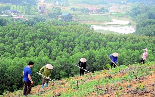 Phát huy vai trò cộng đồng trong giảm phát thải, suy thoái rừng